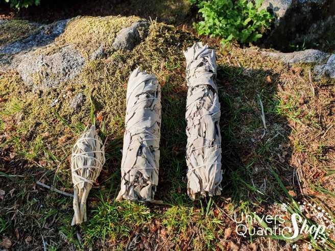 Sauge Blanche Amérindienne – Salvia Apiana – Grand Bâton Purificateur