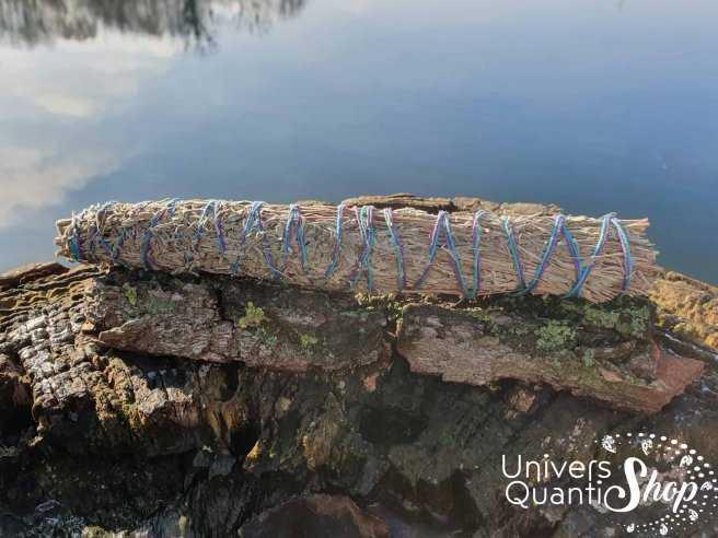 Sauge du Désert – Artemisia Tridentata – Grand Bâton Transformateur