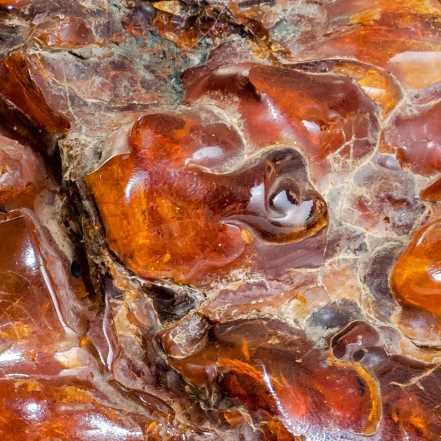 Composition chimique de l'ambre baltique
