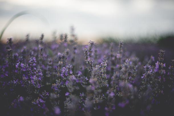 Quelles plantes pour réaliser une bonne fumigation ?