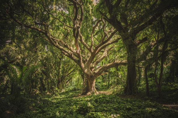 Pourquoi méditer avec un arbre ?