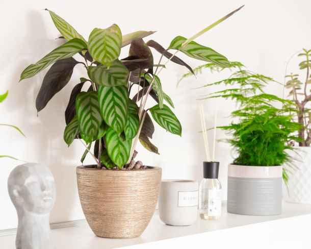 Placez des plantes dépolluantes